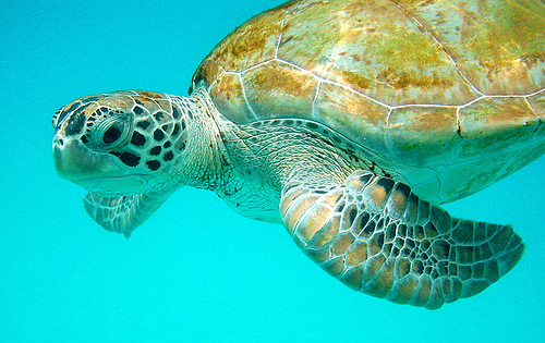 Caribbean Sea Creatures: Come To The Caribbean Islands