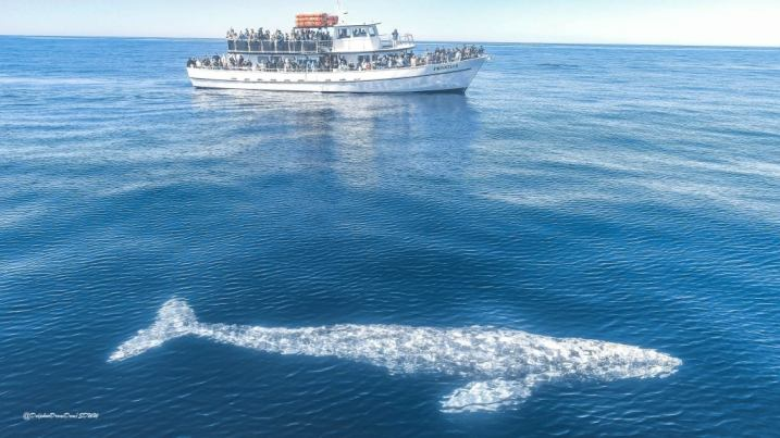 Book Whale watching tours in california all over the year San Diego whale ...