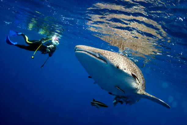 Check Affordable Scuba diving in Andaman price