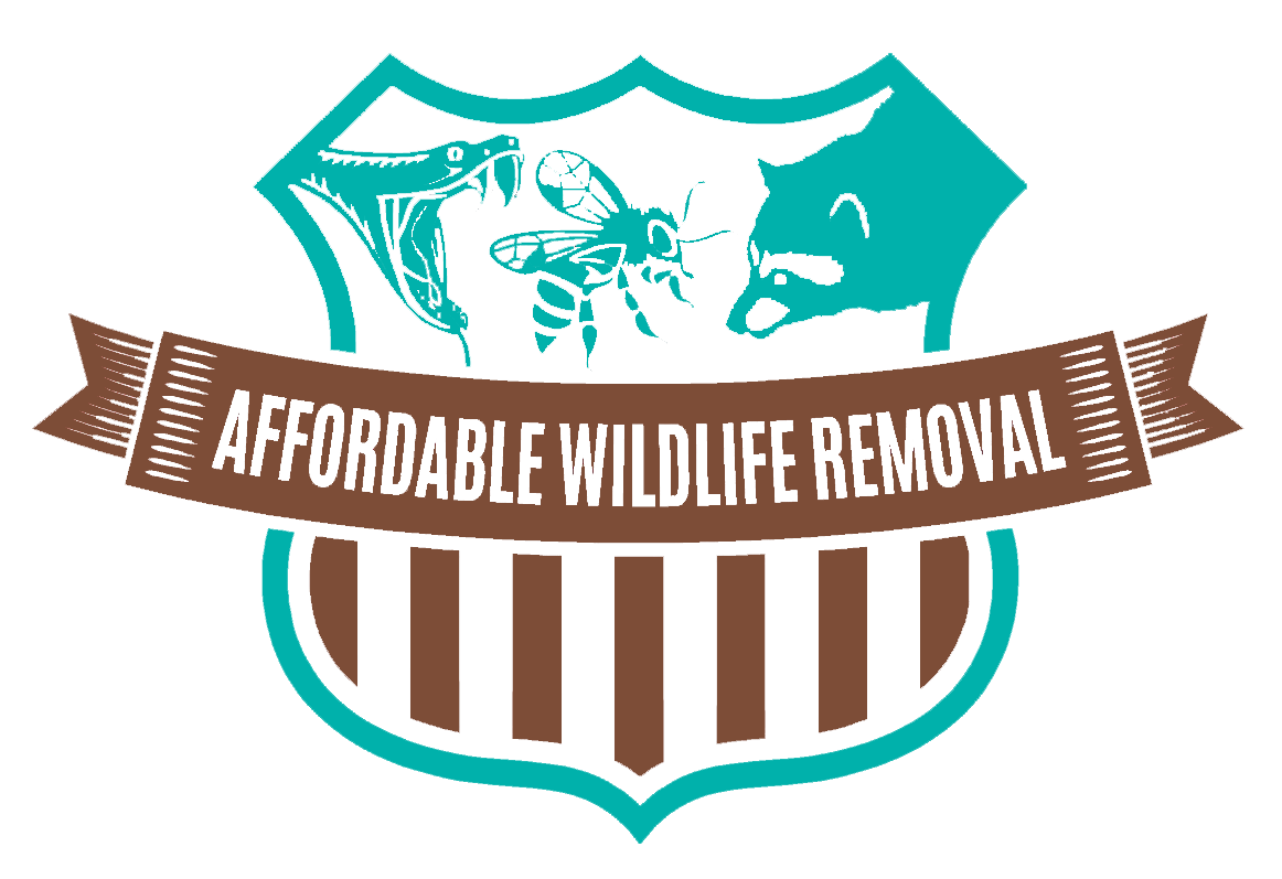 Affordable Wildlife Removal Provide Best Rat removal Services In Orlando