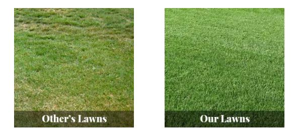 Looking For the Best Parker Lawn Care Services?