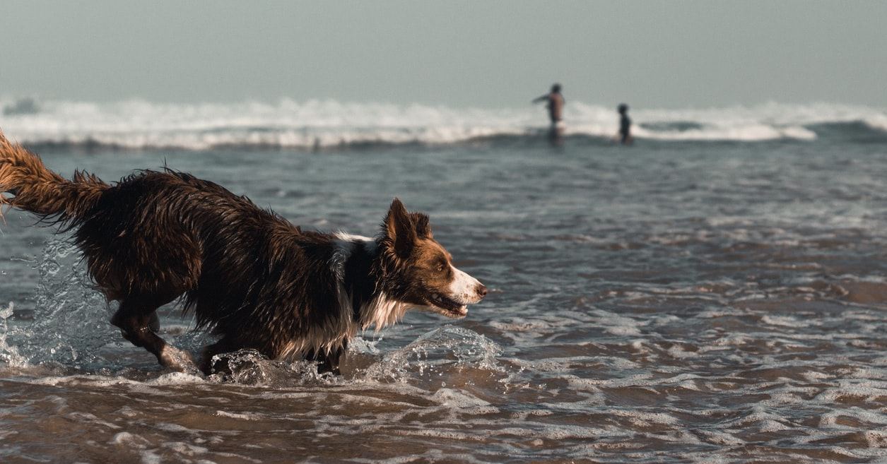 Dogs Stay Free Whitby Enjoy This Summer With Your Dogs