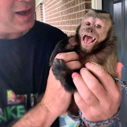 Primates for homes