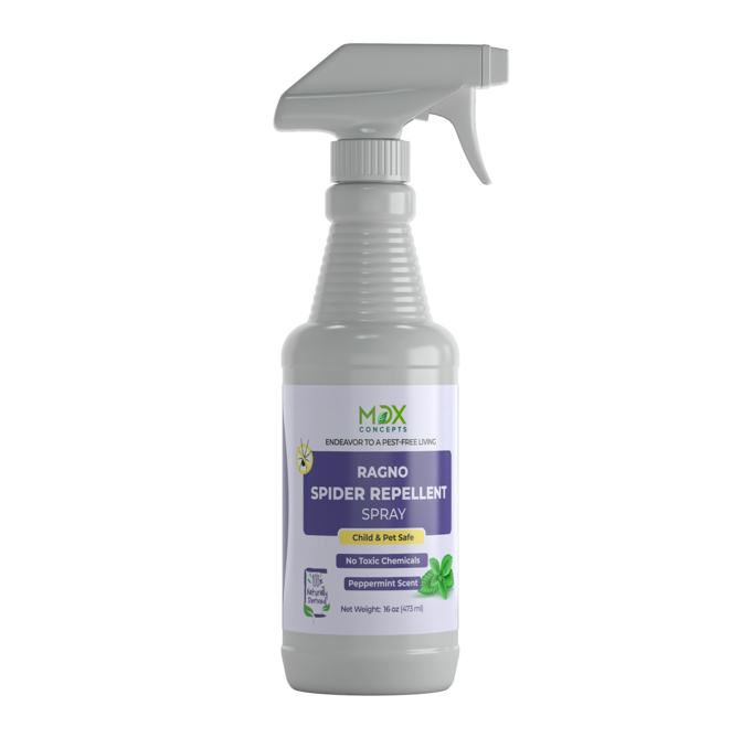 Best Natural Spider Control Spray for House