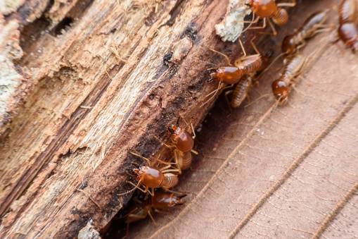 Best Termite Inspection Brooklyn Knockout Pest Control