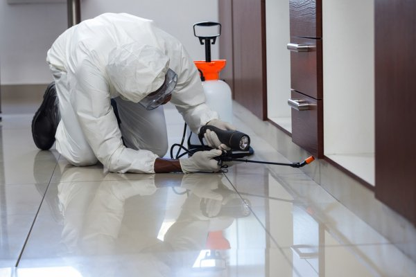 Eliminating Mice and Pests from Your Home pestsolutions.co
