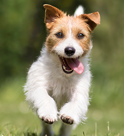 What is referred to as Pet Emergency? How to tackle it?