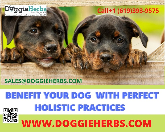 Benefit Your Dog with Perfect Holistic Practices