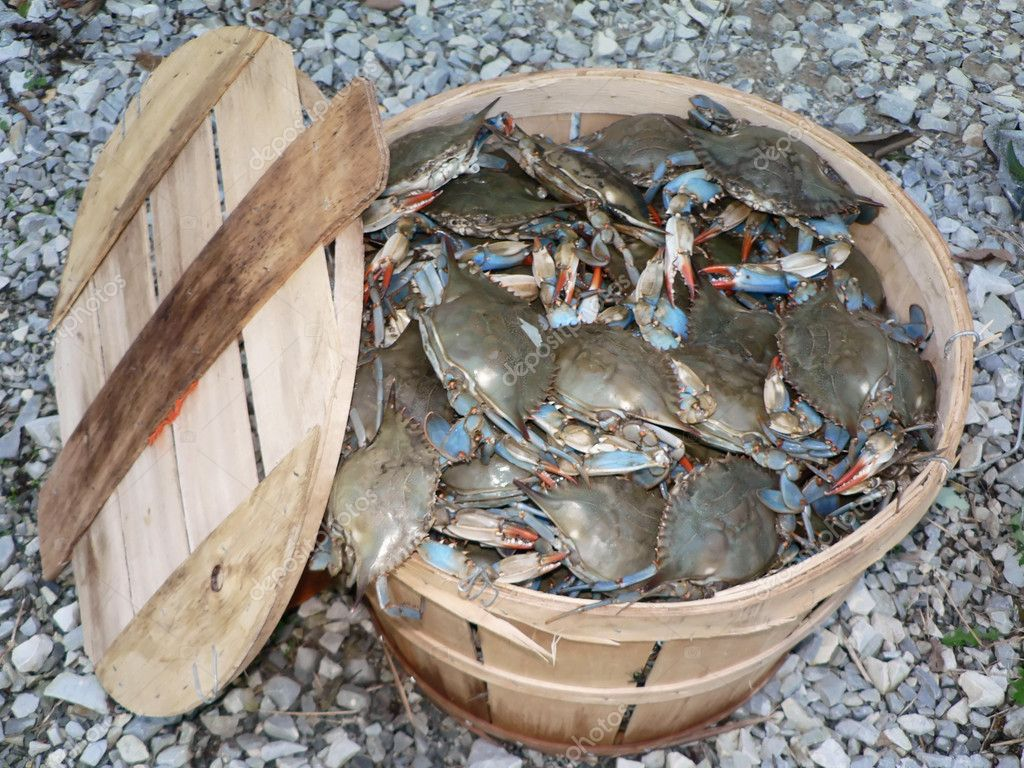 Find The Top Soft Shell Crab Buyers In The US