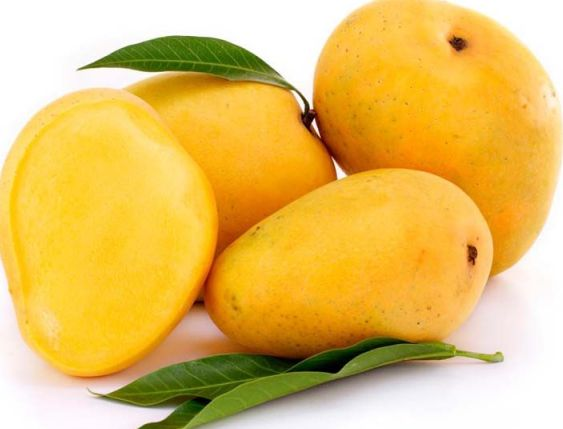 Purchase from Mango Suppliers to Enjoy Delicious Fruit in All Seasons