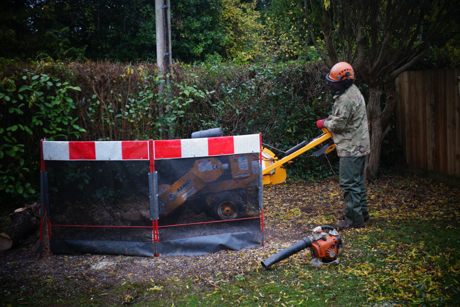 Tree Stump Removal Services Jurassic Tree Services