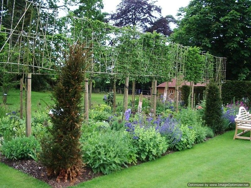 Buy Pleached Evergreen Trees for Your Garden