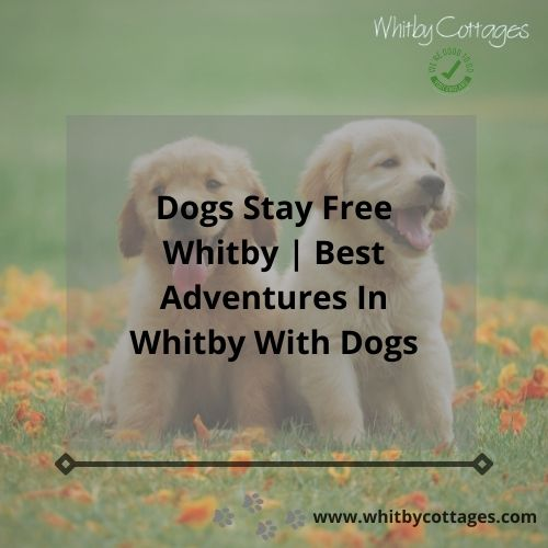 Dogs Stay Free Whitby Best Adventures In Whitby With Dogs