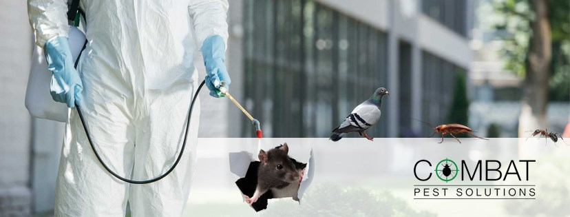 Get Services for Pest Control in Reading from Combat Pest Solutions