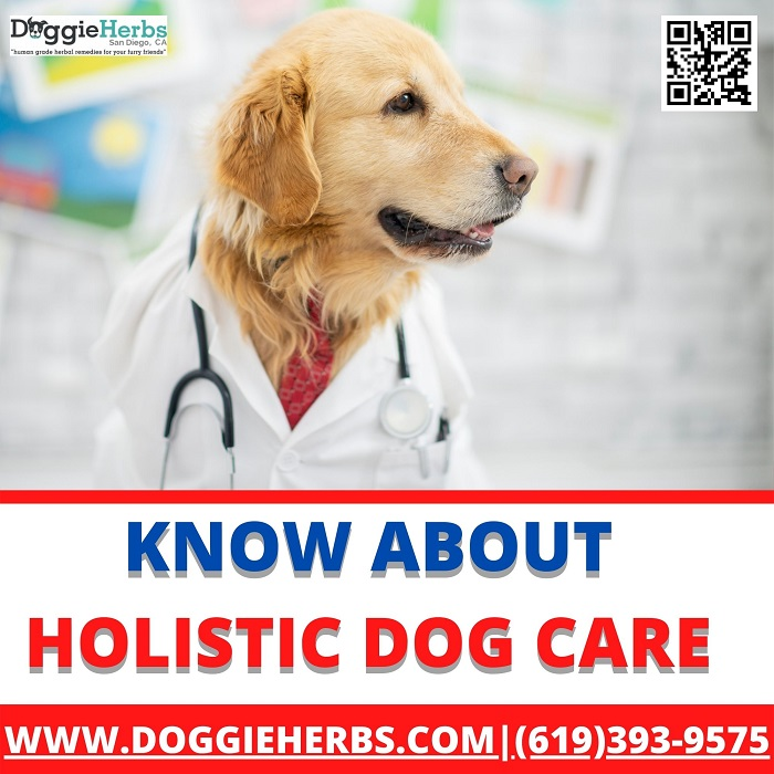 Know About Holistic Dog Care