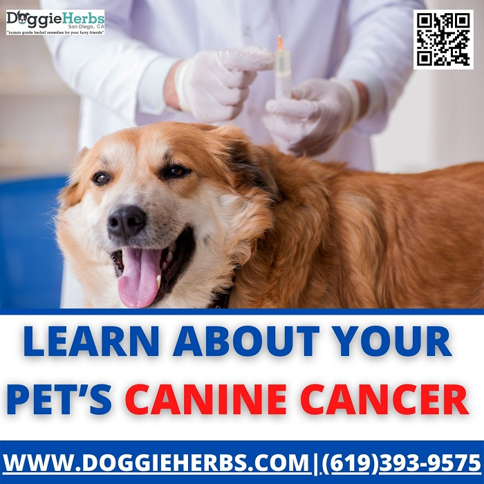 Learn About Your Pets Canine Cancer